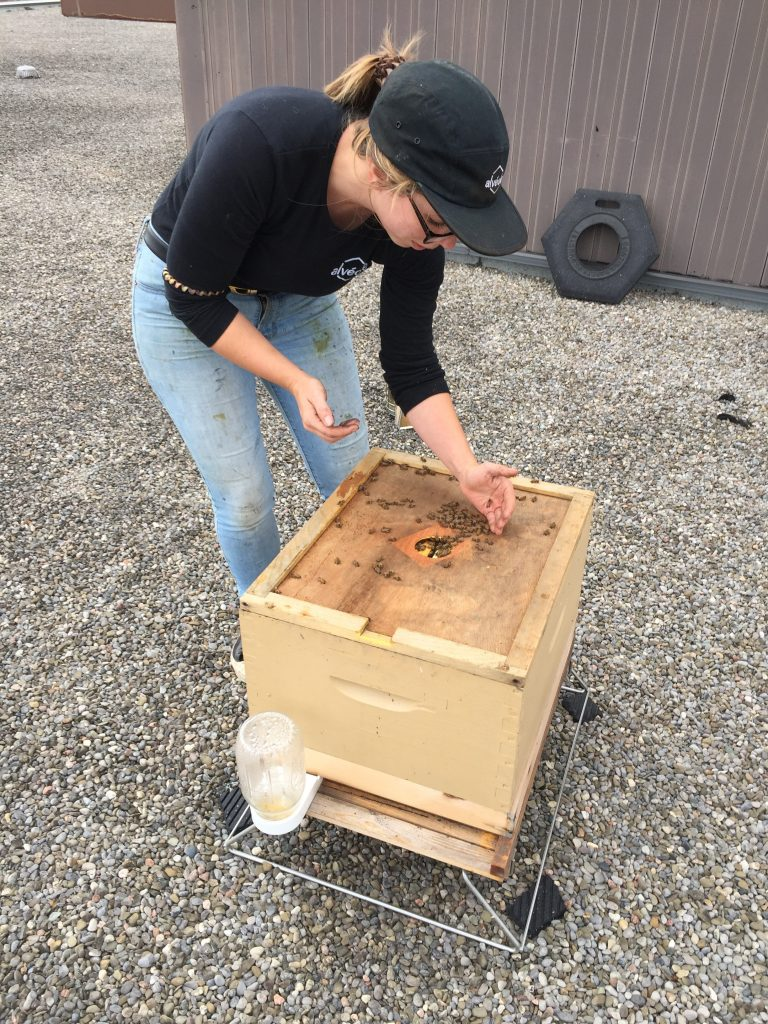 An Alveole beekeeper checking on the hive health.